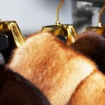 fur coats hanged