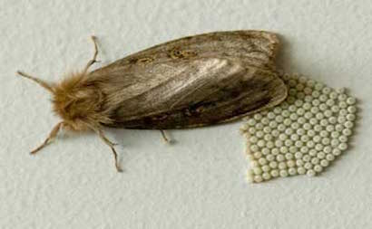 Fur moth identification and moth proofing - Thalia Furs
